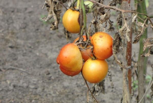 Миллионы смертей во всем мире вызваны нехваткой в рационе фруктов и овощей